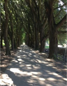 bridle-path-mansion-to-st-annes-church-raheny